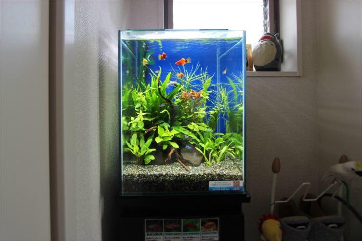 個人宅の廊下に設置 30cm小型熱帯魚水槽 メイン画像