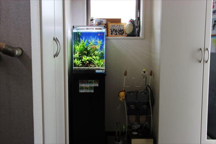 自宅 廊下 水槽