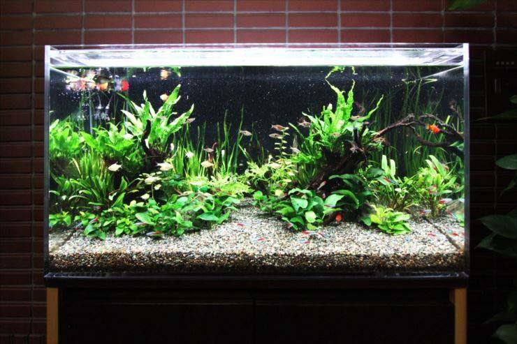 東京都豊島区 企業様  90cm淡水魚水槽  設置事例 メイン画像