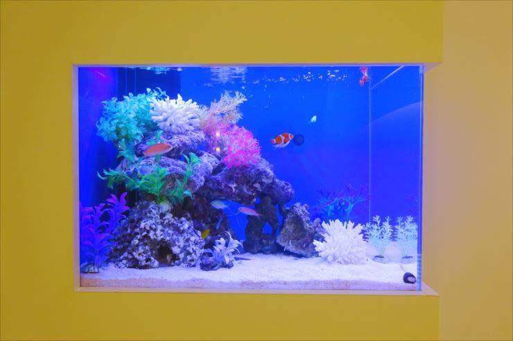 サロン様  60cm壁埋め込み水槽 海水アクアリウム 設置事例 メイン画像