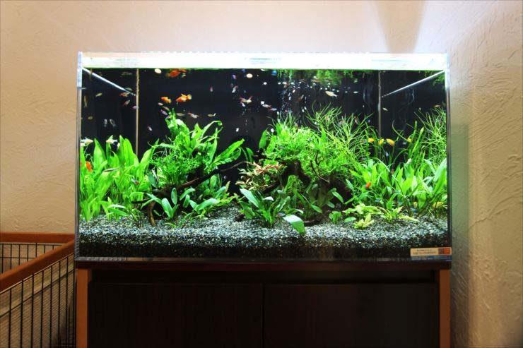 個人宅様  90cm淡水魚水槽  設置事例 水槽画像3