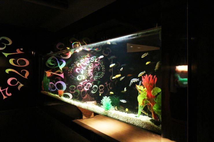 渋谷区 飲食店様 大型水槽 4台 メンテナンス事例 メイン画像