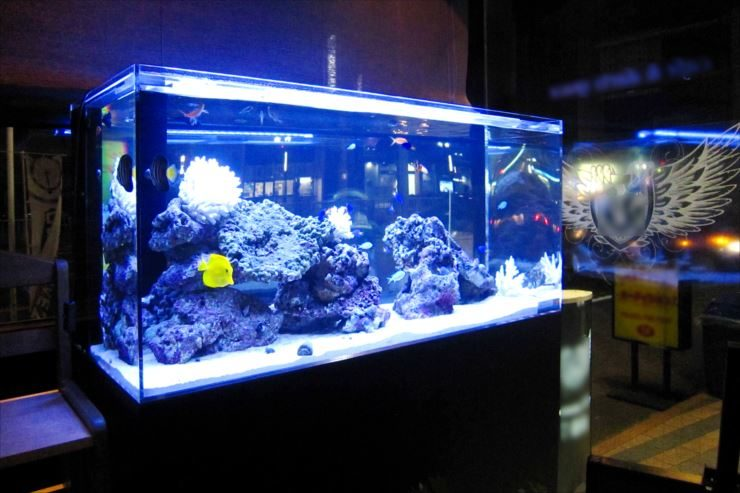 飲食店内 幻想的な特注海水魚水槽 設置事例 メイン画像