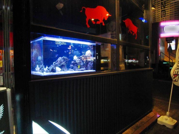 飲食店内 幻想的な特注海水魚水槽 設置事例 水槽画像2