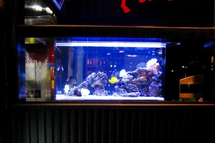 飲食店内 幻想的な特注海水魚水槽 設置事例 水槽画像3