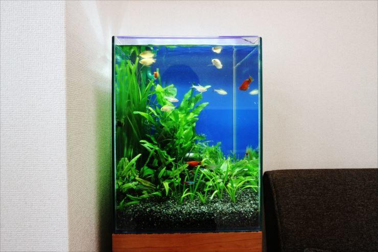 目黒区 個人宅のリビング 30cm小型淡水魚水槽 設置事例 メイン画像