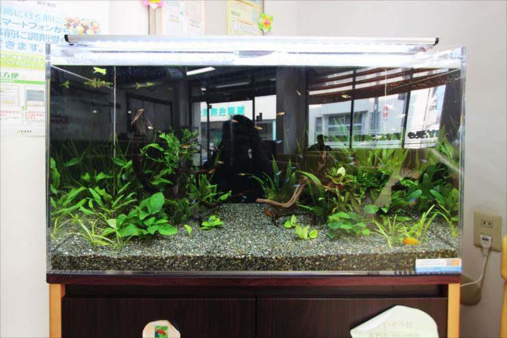 墨田区 薬局の待合室 90cm淡水魚水槽 設置事例 水槽画像1