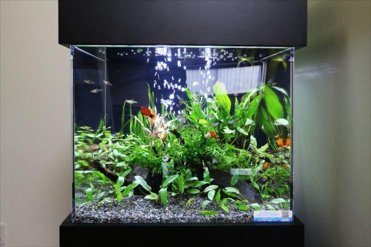 オフィス事務所 スタイリッシュな45cmキューブ淡水魚水槽 メイン画像