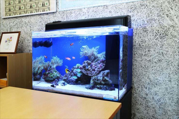オフィスの打ち合わせスペース 60cm海水魚水槽 設置事例 メイン画像
