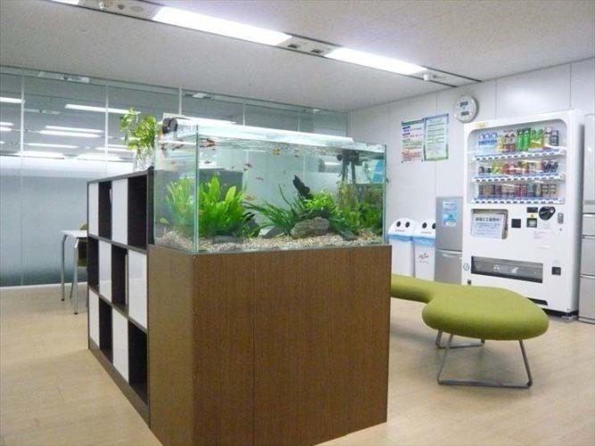 神奈川県川崎市 企業様  90cm淡水魚水槽  レンタル事例 メイン画像