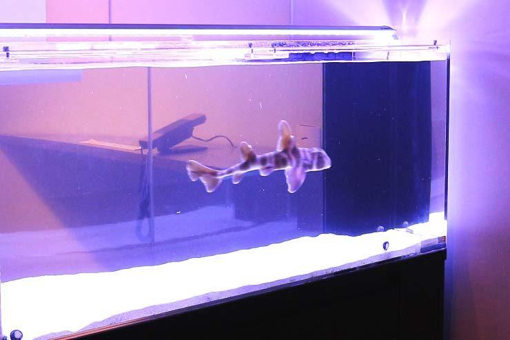 新宿区 オフィス 120cmネコザメ水槽 設置事例 メイン画像