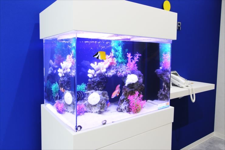 荒川区 オフィス 60cm海水魚水槽 設置事例 水槽画像2