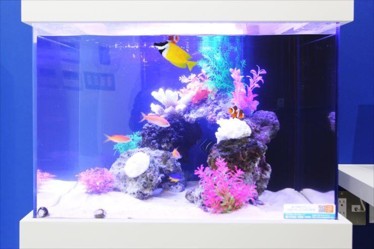 荒川区 オフィス 60cm海水魚水槽 設置事例 水槽画像3