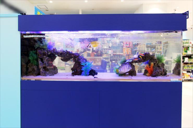 神奈川県相模原市 薬局の待合室 150cm海水魚水槽事例 水槽画像2