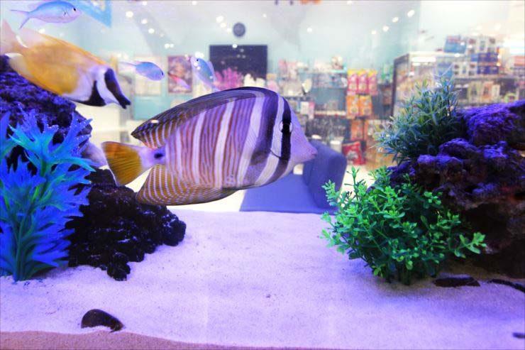 神奈川県相模原市 薬局の待合室 150cm海水魚水槽事例 水槽画像3