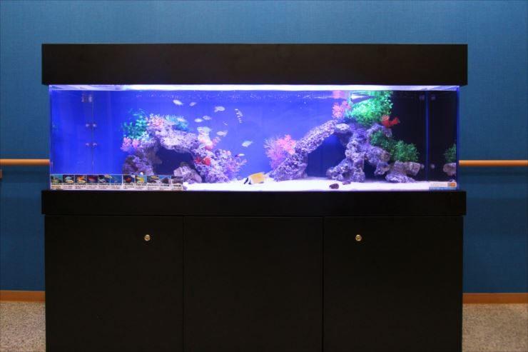 老人ホーム 施設内に設置 150cm海水魚水槽事例 メイン画像