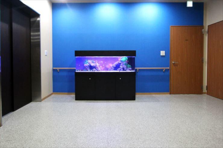 老人ホーム 施設内に設置 150cm海水魚水槽事例 水槽画像2