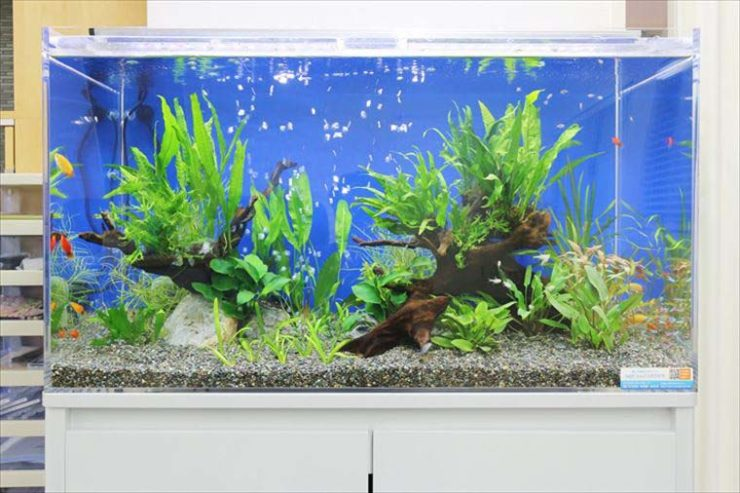 オフィスに設置 水草アクアリウム(淡水魚水槽)の事例 メイン画像