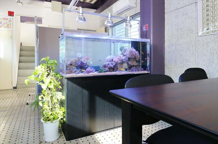 オフィス 打ち合わせスペースに設置 海水アクアリウム事例 メイン画像