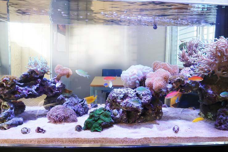 オフィス 打ち合わせスペースに設置 海水魚水槽レンタル事例 水槽画像2