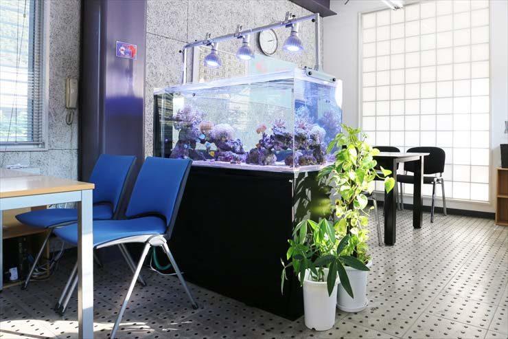 オフィス 打ち合わせスペースに設置 海水魚水槽レンタル事例 水槽画像3