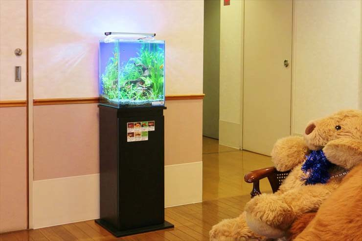 中野区 学生寮 30cm淡水魚水槽 お試し設置事例 水槽画像1