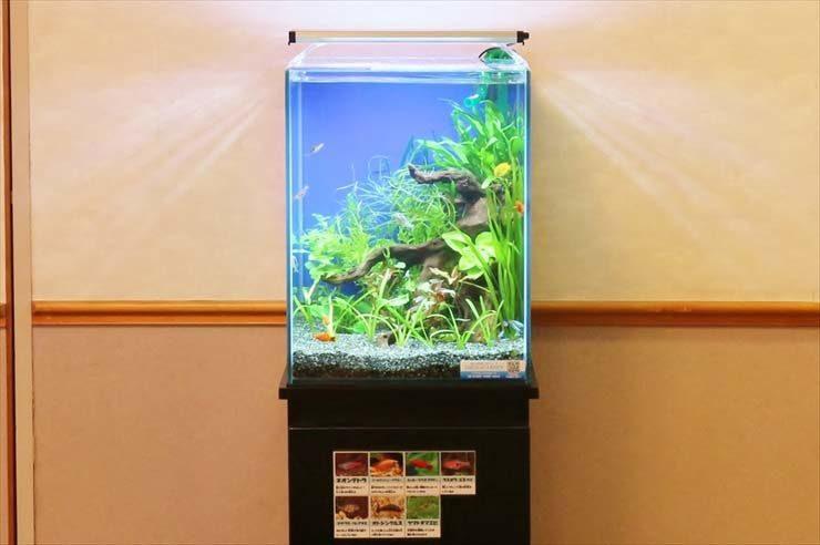 中野区 学生寮 30cm淡水魚水槽 お試し設置事例 水槽画像2