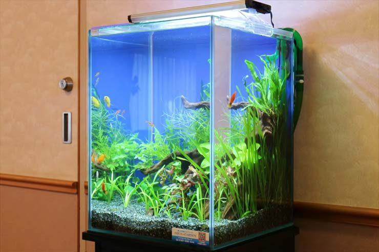 中野区 学生寮 30cm淡水魚水槽 お試し設置事例 水槽画像3