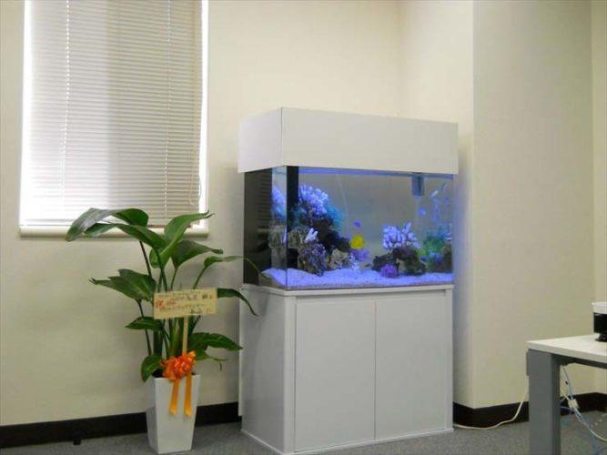 東京都新宿区 企業様  90cm海水魚水槽  水槽レンタル事例 お引越し メイン画像