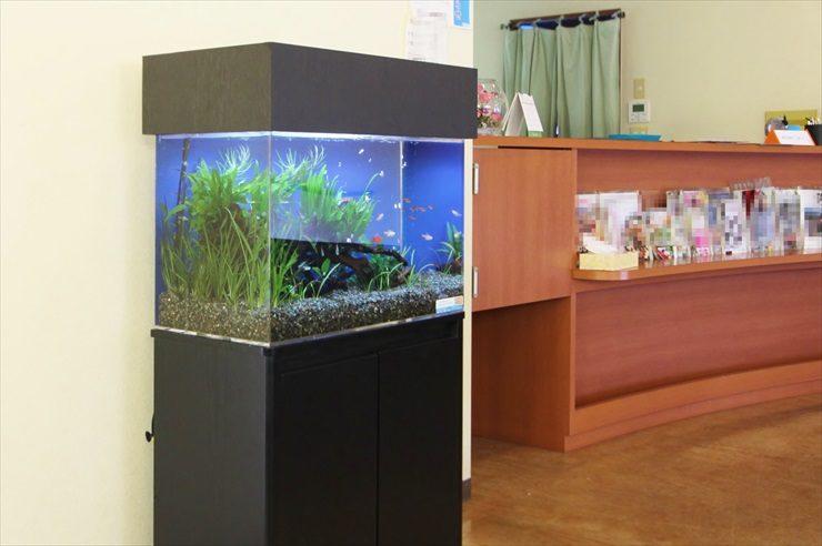 神奈川県 耳鼻咽喉科の待合室 60cm淡水魚水槽 設置事例 メイン画像
