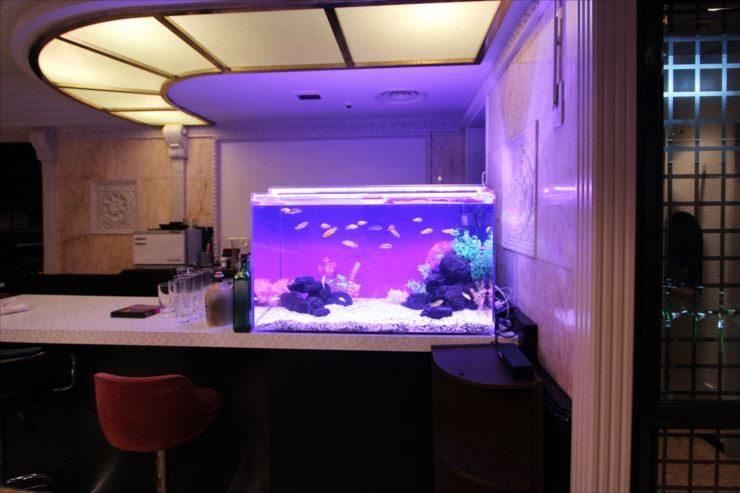 新宿 飲食店に設置 90cm淡水水槽と120cm淡水水槽 メイン画像