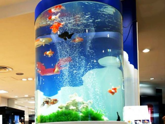 百貨店イベント 金魚の円柱水槽 設置事例 メイン画像