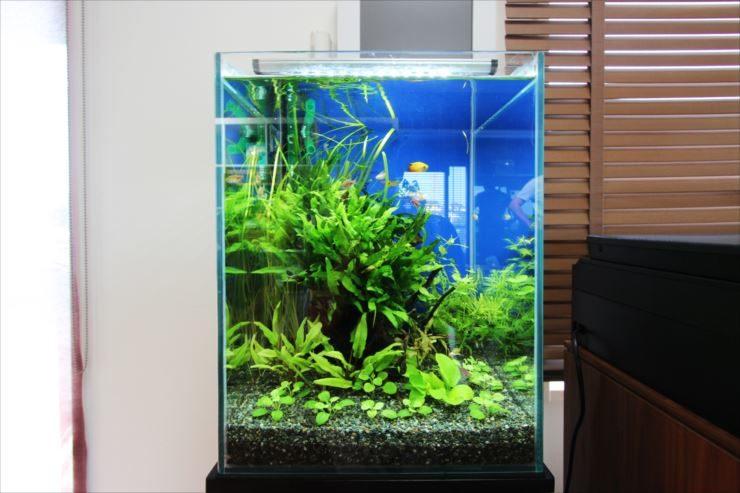 個人宅のリビングルーム 30cm淡水魚水槽 設置事例 メイン画像