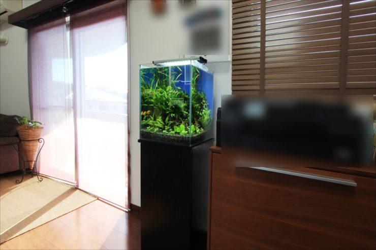 個人宅のリビングルーム 30cm淡水魚水槽 設置事例 水槽画像2