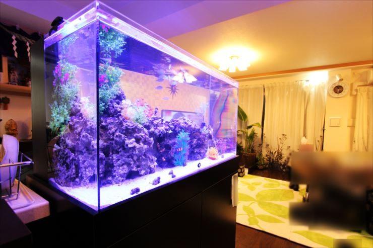 神奈川県横浜市の個人宅様に設置 アクアリウム(海水魚水槽)の事例 メイン画像