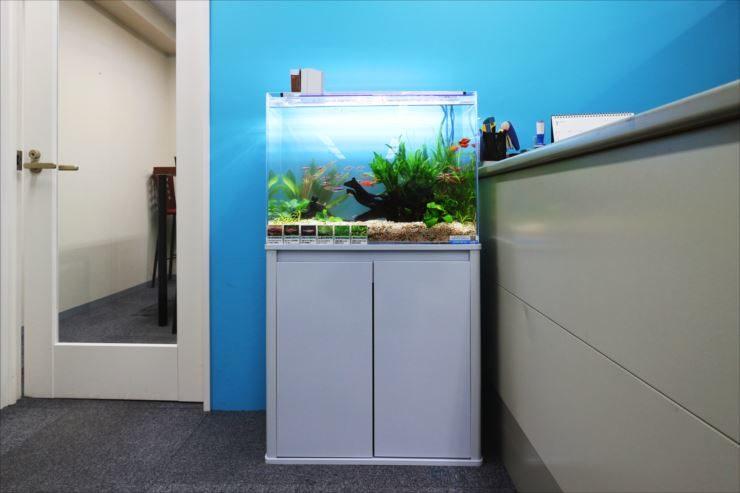 港区 医療施設の受付に設置 60cm淡水魚水槽事例 メイン画像