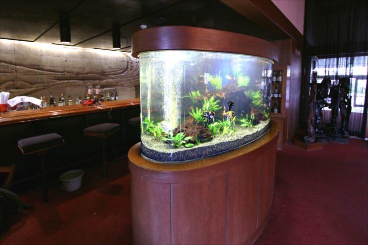 神奈川県茅ヶ崎 飲食店の大型半円水槽 リニューアル事例 メイン画像