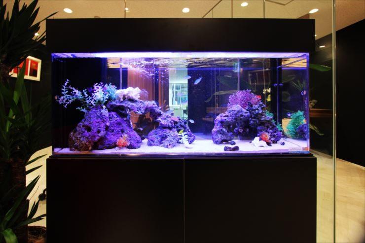 千代田区 オフィスのエントランスに設置 120cm海水魚水槽リース 水槽画像2
