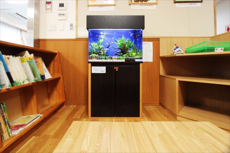 板橋区 保育園に設置 60cm淡水魚水槽事例 メイン画像