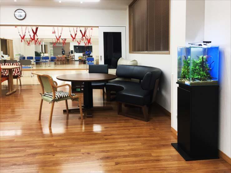老人ホームに設置 お試し30cm淡水魚水槽事例 水槽画像1