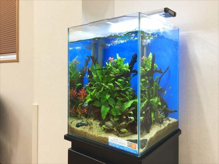 老人ホームに設置 お試し30cm淡水魚水槽事例 水槽画像2