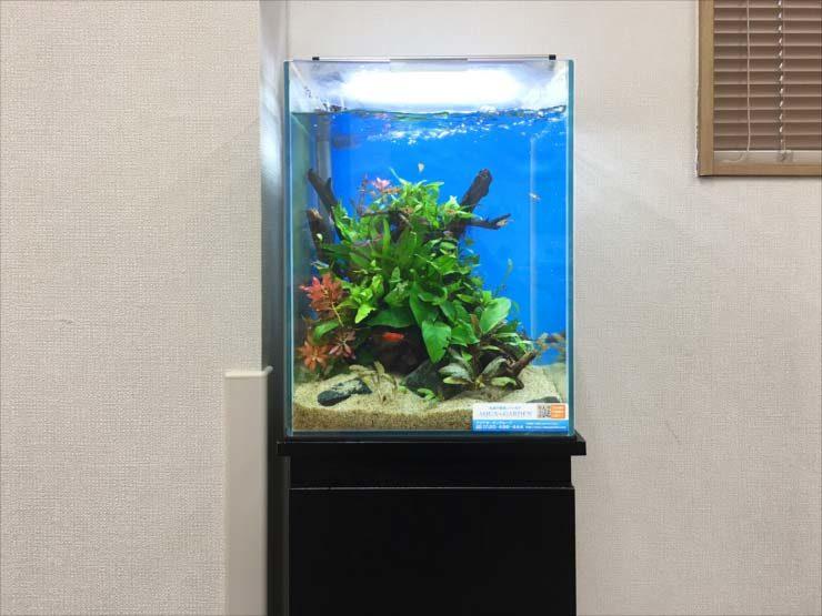 老人ホームに設置 お試し30cm淡水魚水槽事例 水槽画像3