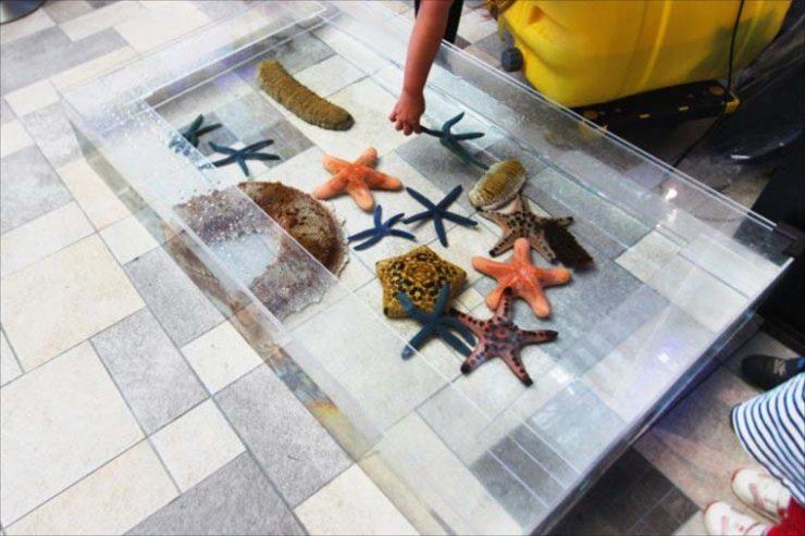 サンシャインイベント 海水魚水槽・タッチプールの設置事例 メイン画像