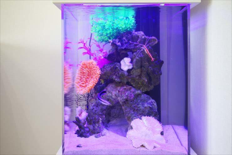 個人宅のリビングに設置 スタイリッシュな小型水槽事例 水槽画像2