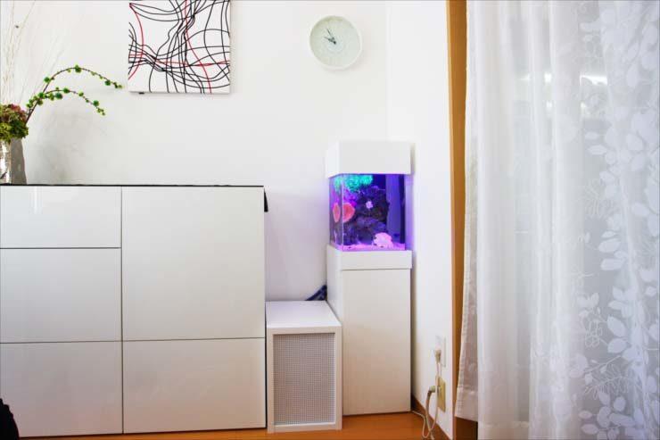 個人宅のリビングに設置 スタイリッシュな小型水槽事例 水槽画像3