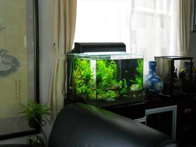 都内 企業様  45cm淡水魚水槽  設置事例 メイン画像