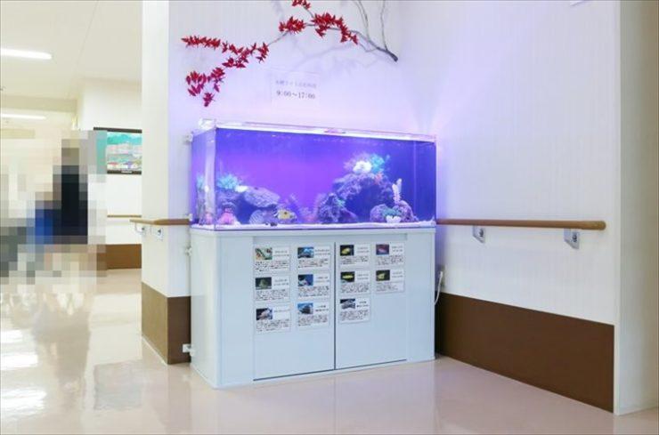 神奈川県横浜市 介護老人保健施設 120cm海水魚水槽設置事例 水槽画像1