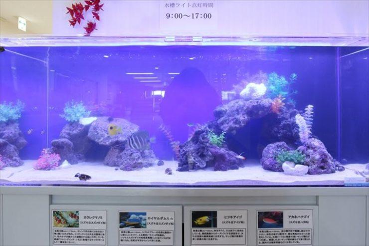 神奈川県横浜市 介護老人保健施設 120cm海水魚水槽設置事例 水槽画像3