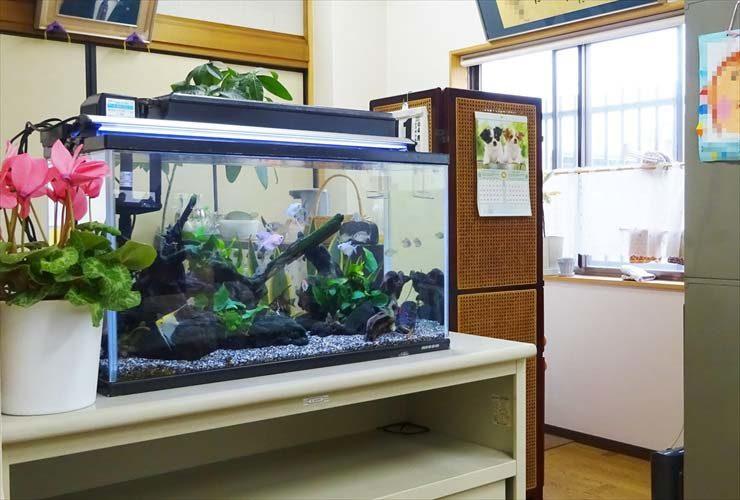 オフィス事務所に設置 両面仕様60cm淡水魚水槽事例 メイン画像