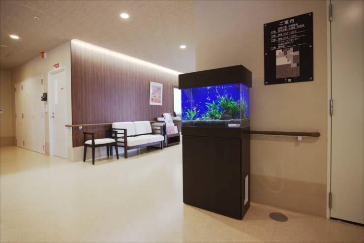 病院内の廊下に設置 60cm淡水魚水槽事例 メイン画像